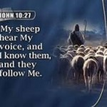 Jesus & sheep 2